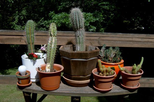 Saboten @ start of 2007 outdoor season