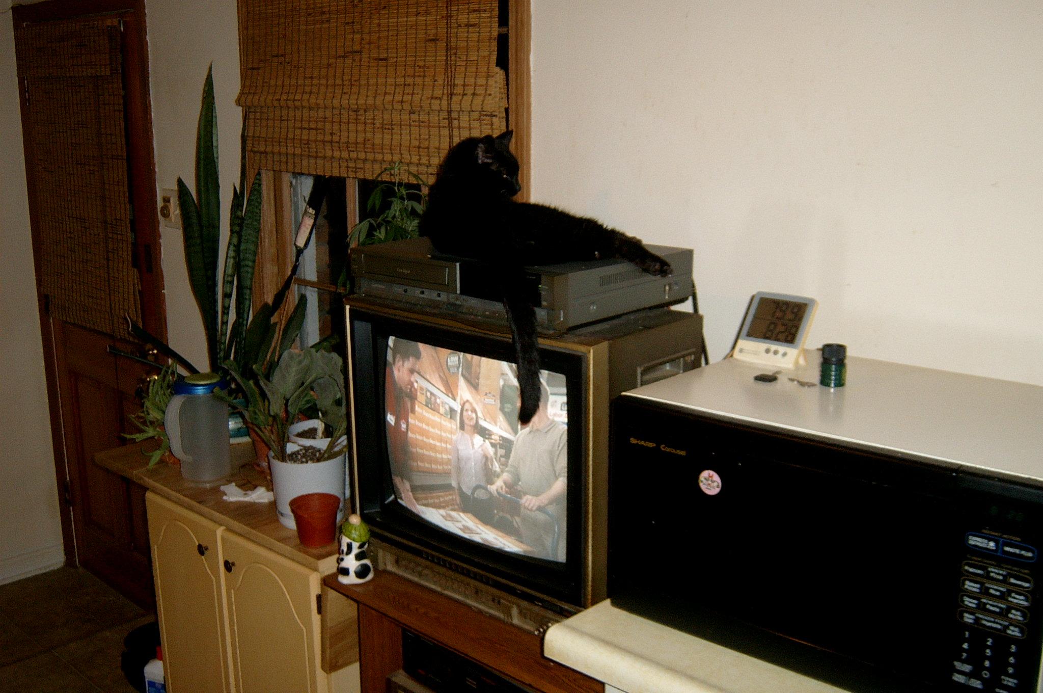 Strange black spot on tv...