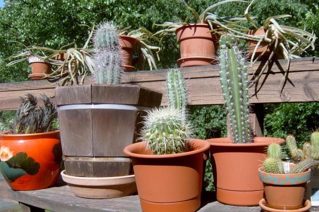 Cacti 2005